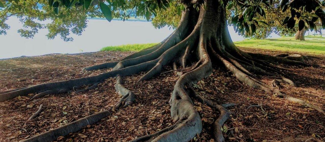 gray-trunk-green-leaf-tree-beside-body-of-water